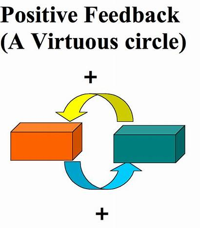 Feedback Positive Biology Process Stimulus Flashcards Speeds