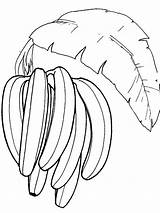 Banana Coloring Fruits Bananas Printable Recommended sketch template