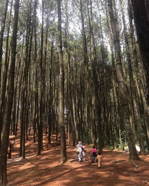 hutan pinus asri mencari kenyamanan  sudut jogja