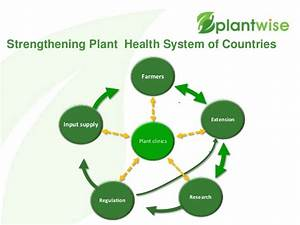 Beyond Implementation Of Plant Clinics To Sustainably