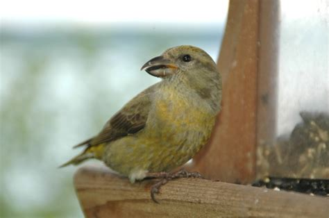 wild birds unlimited answers any backyard bird question