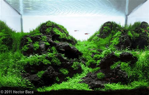 Aquascape Design Layout by Looking For Tips Tricks In A Mountain Aquascape