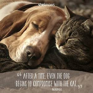 50 Cat Quotes That Only Feline Lovers Would Understand ...
