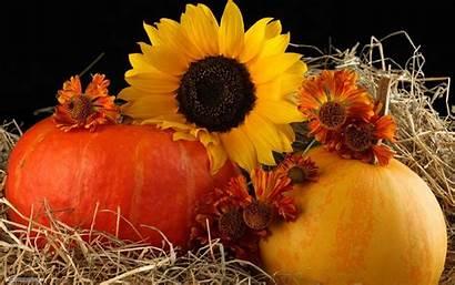 Autumn Harvest Sunflower Pumpkin Desktop Abstract Fall