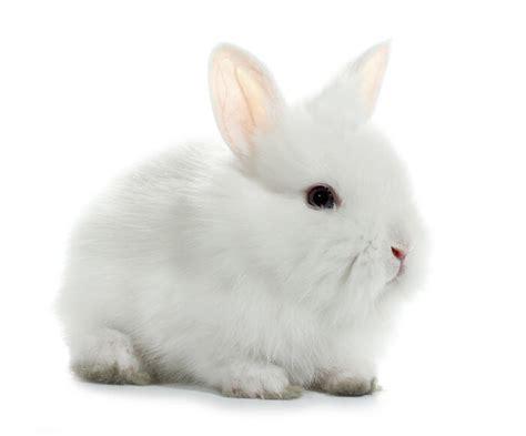 care   rabbit