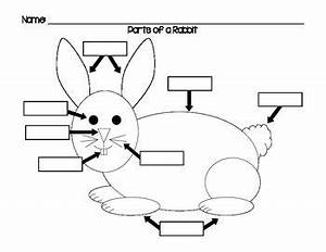 label the parts of a rabbit using this diagram students With rabbitdiagram