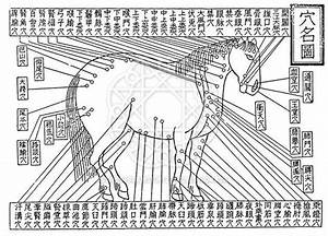 China  Acupuncture Diagram From Bo Le U0026 39 S Classic Equestrian