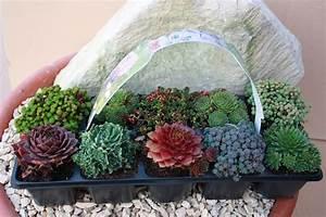 Winterharte Pflanzen Liste : sedum ~ Michelbontemps.com Haus und Dekorationen