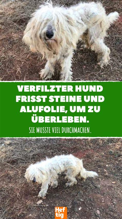 Hund Frisst Steine by Verfilzter Hund Frisst Steine Und Alufolie Um Zu