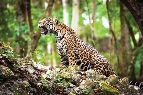world wildlife day   unexpected threats