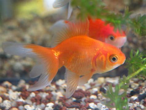 quels poissons d aquarium choisir les v 233 t 233 rinaires