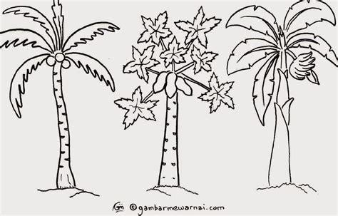 gambar gambar mewarnai buah manggis pohon jeruk rebanas di