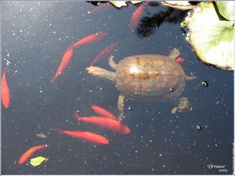 poissons et tortues jardinerie riera