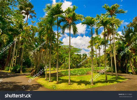 Garden Decoration Mauritius by Plemousses Botanical Garden Mauritius Stock Photo