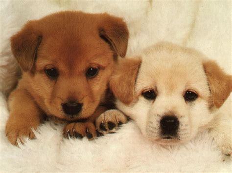 Cute Pixs Puppies Dogs Pets Nigeria