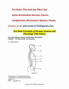 Test 20bank 20essentials 20of 20human 20anatomy 20and