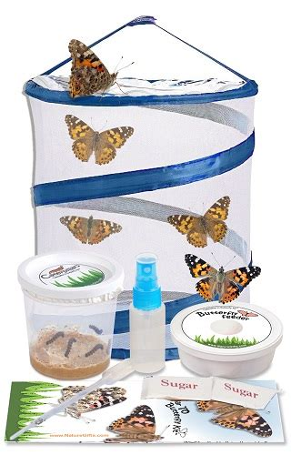 butterfly kits butterfly  nature gifts