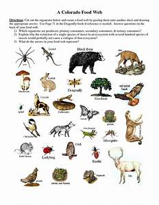 Producers+Consumers+and+Decomposers+Worksheet | Producers ...