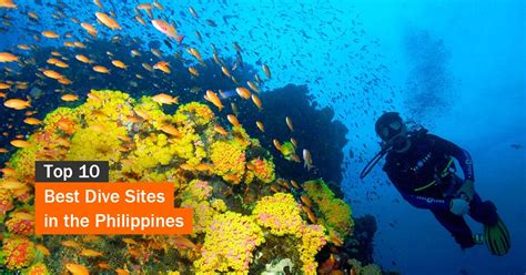 Best Dive Destinations by Top 10 Best Dive In The Philippines Tourist Spots