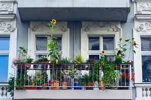 Sonnenblume Im Topf : sonnenblumen pflanzen pflegen vermehren und mehr ~ Orissabook.com Haus und Dekorationen