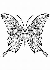 Butterfly Coloring Pages Adult Adults sketch template