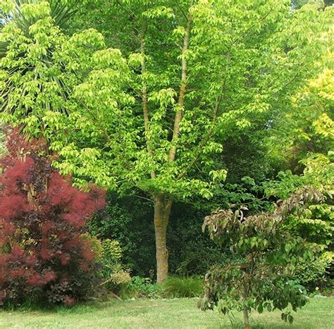 garden trees trees in the dog path garden