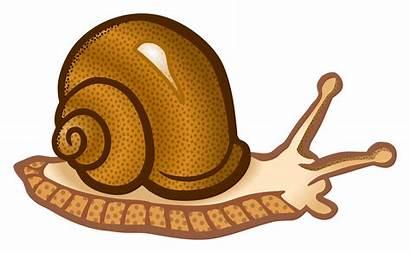 Snail Clipart Schnecke Clip Transparent Sea Escargot