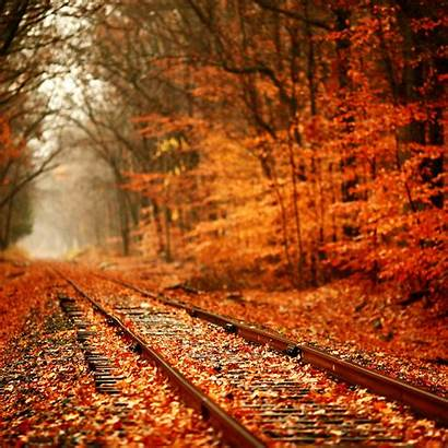 Leaves Autumn Tracks Train Covered Rate