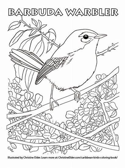 Coloring Birds Caribbean Warbler Bird Pages Children