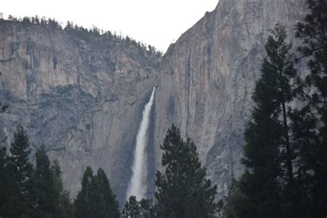 Yosemite Falls View From The Village Picture Half