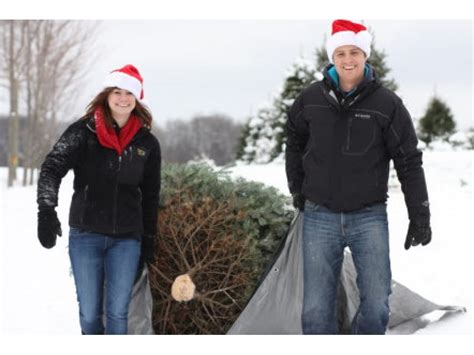 cut down your own christmas tree edmonton where to cut your own tree in the chicago burbs and beyond lemont il patch
