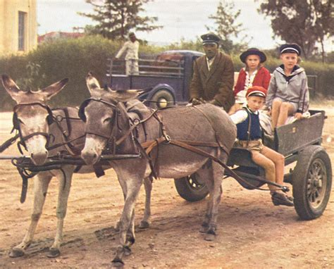 Donkey Carts The 4x4s Of Rural Namibia Gondwana