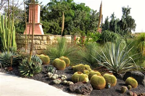 types  cactus  grow   garden