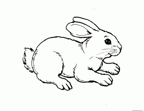 Free Coloring Pages Baby Animals - Coloring Home