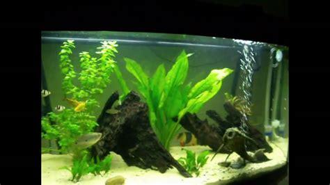 re eclairage aquarium juwel 180 my juwel vision 180 tropical fresh water aquarium community setup