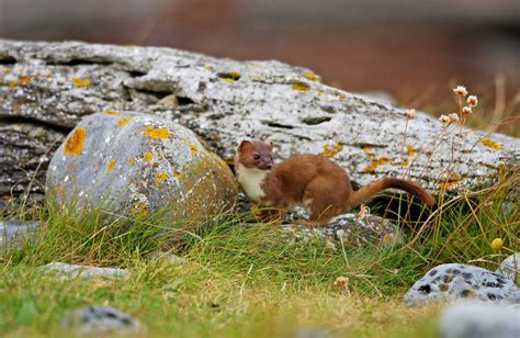 The Vincent Wildlife Trust Takes On New Study Of The Irish