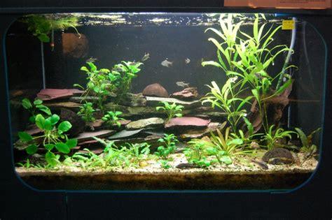 n 176 16 aquarium d am 233 rique du sud mise 224 jour 224 venir