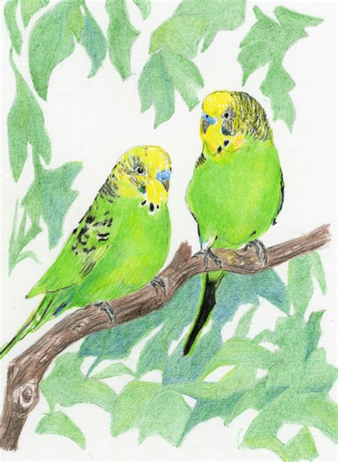 diane wright art journal colored pencil birds