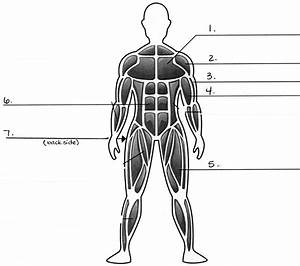 Muscular System Diagram Blank