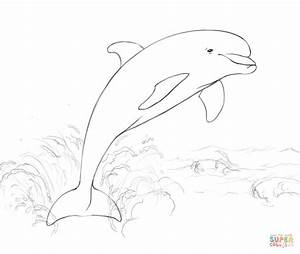 Dolphins Jumping Out Of The Water Drawings | www.pixshark ...