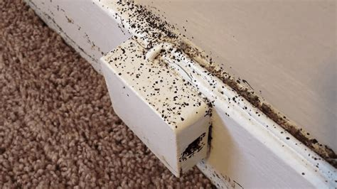 how do you get bed bugs where do bed bugs come from in your house