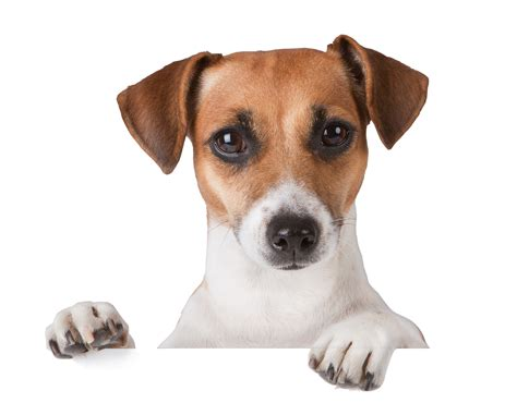 Veterinary Cpas & Consultants  Katz, Sapper & Miller