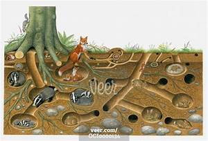Illustration Of Red Fox And European Badger Living And