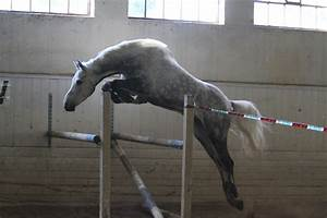Práce u koní v zahraničí