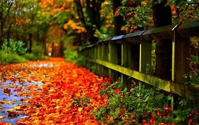 Leaves Fall Autumn Wallpapers Inn