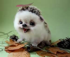 Cute Baby Hedgehog Smiling