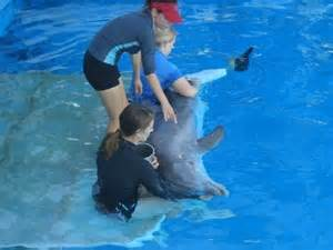 Winter the Dolphin Clearwater Marine Aquarium Hope