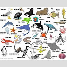 Sea Animals Vocabulary With Pictures English Words