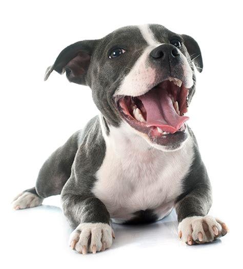 dogs animal refuge league  greater portland maine