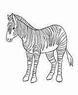 Zebra Coloring Animal Sheet Wild Printable Sheets Sad Quotes Books Animals Popular Library Clipart Clip sketch template